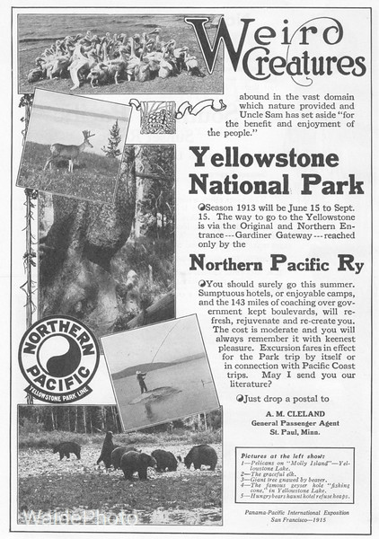 1913 Northern Pacific.
