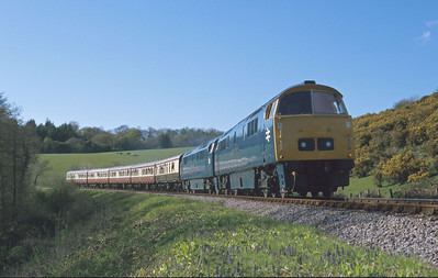 The coaching stock doesn't look quite right for a pair of blue Westerns but the train was full and that's probably what matters most. D1023 and D1010 head up the WSR beside gorse and bluebells during a springtime diesel gala. 29/4/00