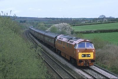 On home ground, D1015 sweeps up the bank at Brewham with a train of mark 1 coaches, bound for the West Country.