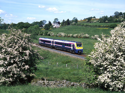 175011 is caught amongst the hawthorn blossom at Bowston with a Windermere branch train 23/5/04.