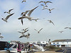 Attack of the seagulls at Hayling Island. 7th May 2012