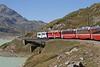 13 September 2007 :: Two RhB ABe 4/4 railcars passing Lago Bianco on the Bernina line