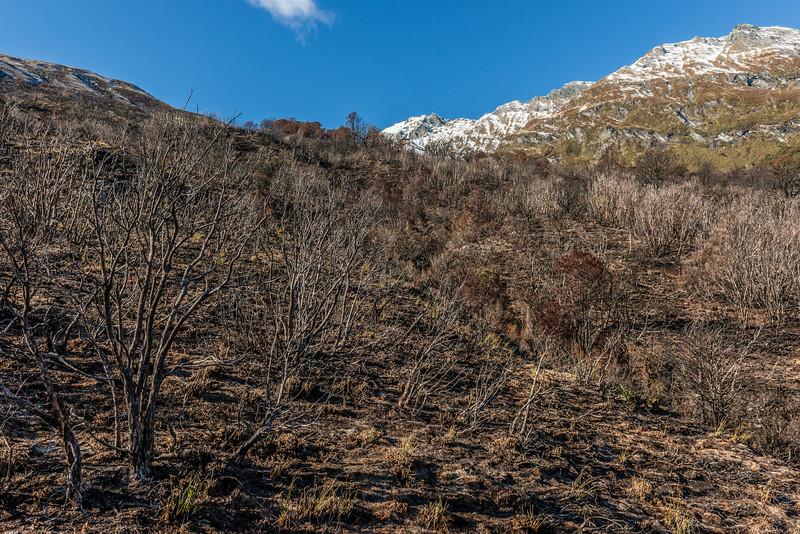 The burnt area below Albert Burn Saddle