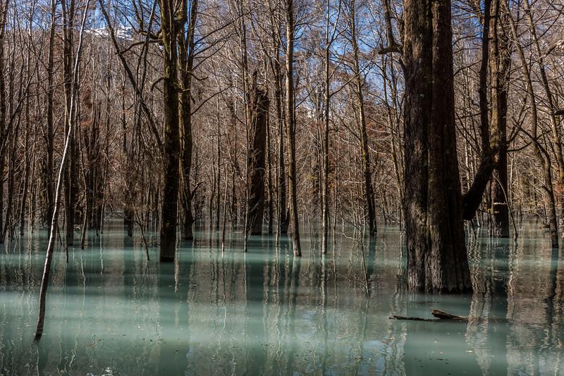 Submerged forest, Dart Lake