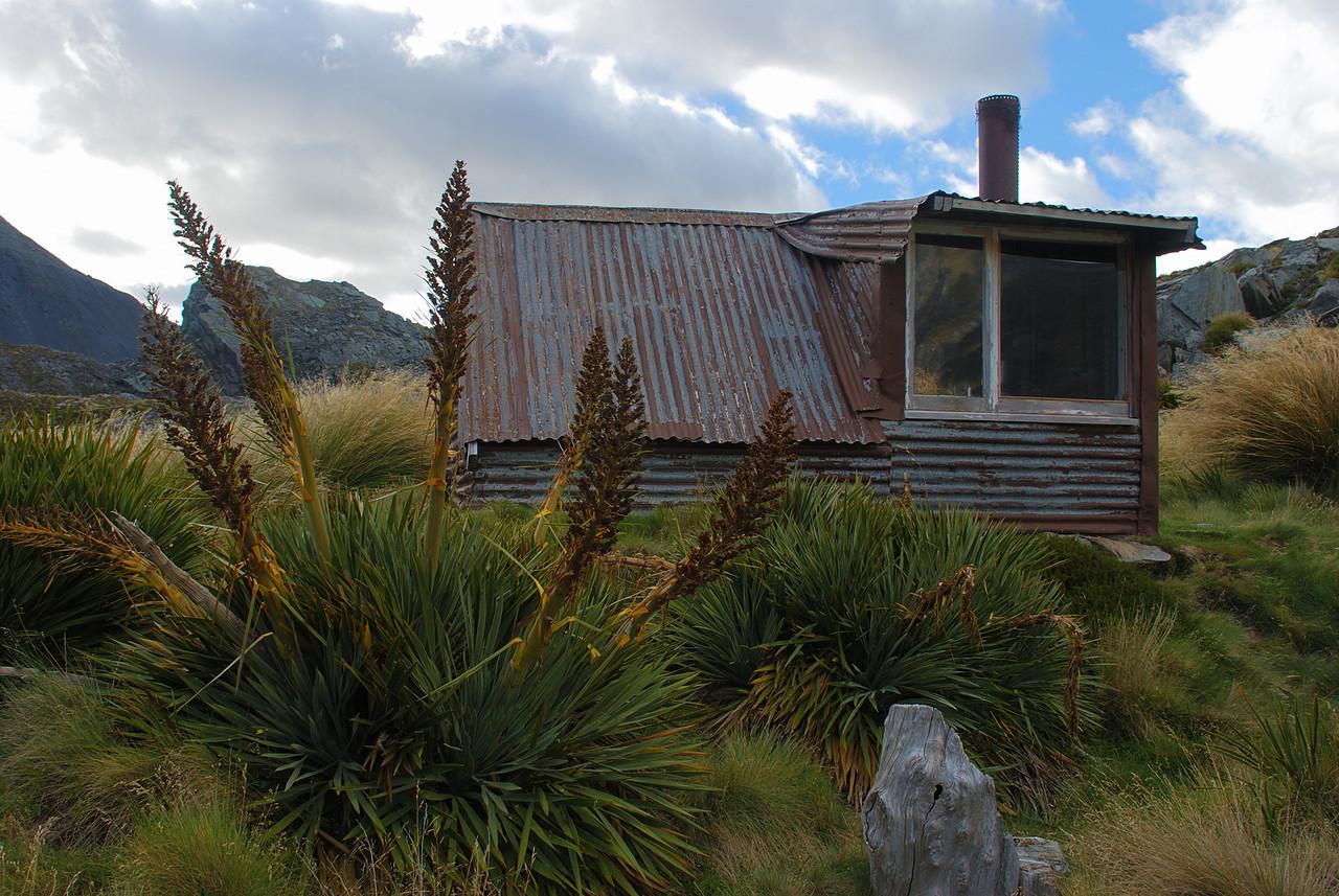 Giant speargrass (Aciphylla scott-thomsonii). Lochnagar Hut