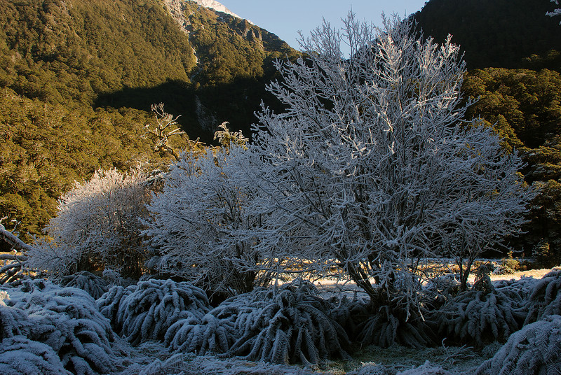 Hoar frost at Pearl Flat, Matukituki River West Branch