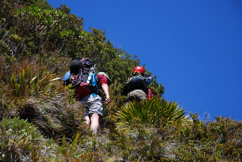 Climbing through the scrub to the Rob Roy bivvy rocks.