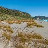 Pīngao / golden sand sedge (Ficinia spiralis). Homminy Cove, South Westland.