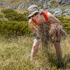 Esther gathering tussock to improve the rock bivvy