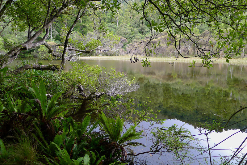 Found!  The 'Lost Lake' near the Ruamahanga river