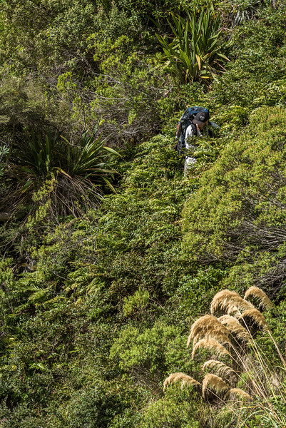 A bit of bush-bashing in the upper Hapuku River