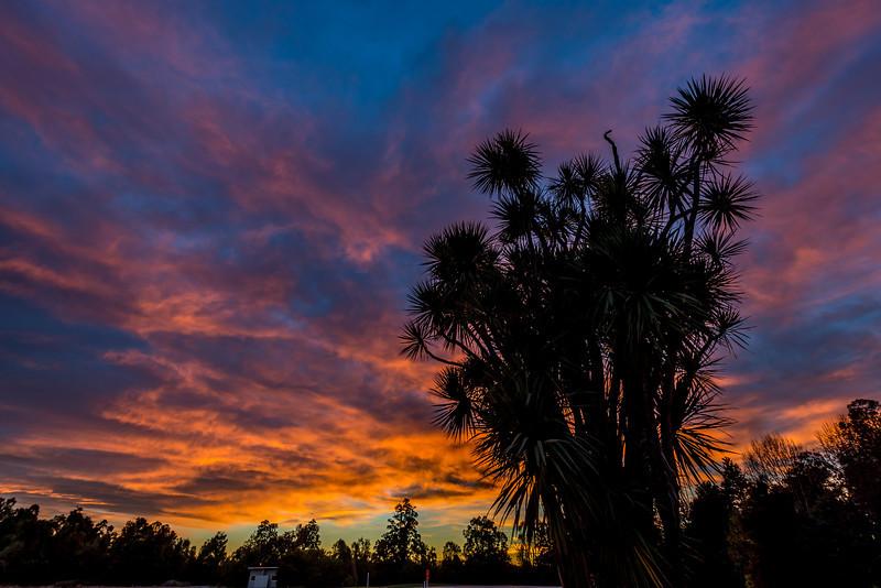 Sunrise at Mills Bush, Peel Forest
