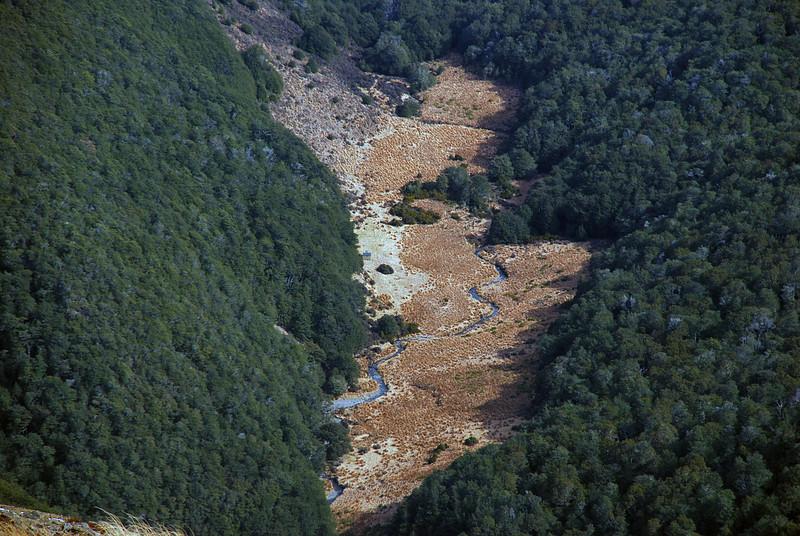 Cromel Branch clearings, Cromel Stream. Spot Cromel Branch Hut!