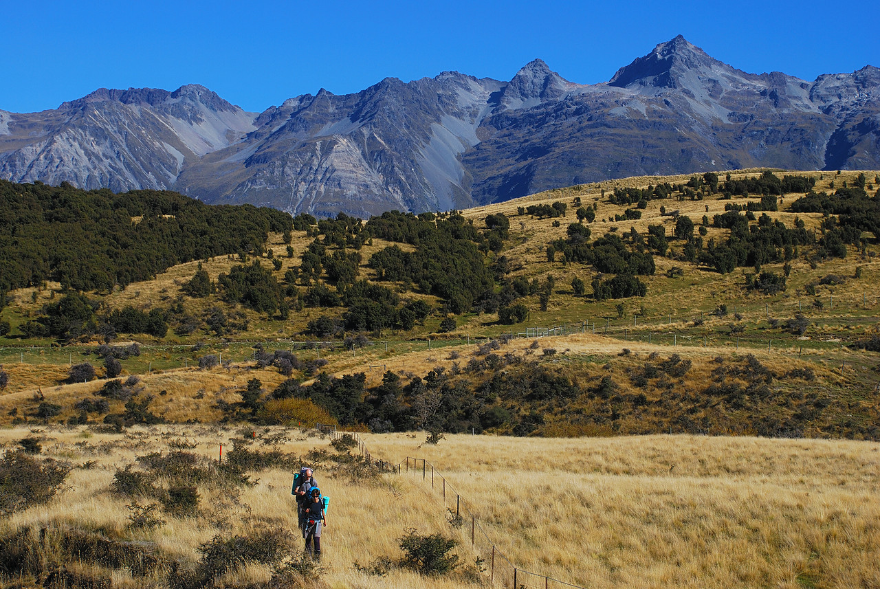 On the McIntosh Loop track, crossing river terraces near Chinamans Creek. Bold Peak above