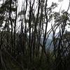 Lancewood/Kanuka forest
