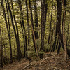 Nice mountain beech forest