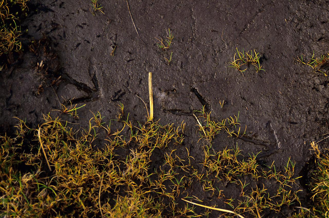 Kiwi footprints near Robin Saddle