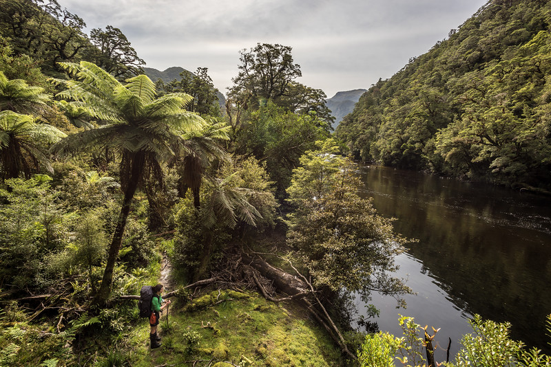 On the Dusky Track, Seaforth River.