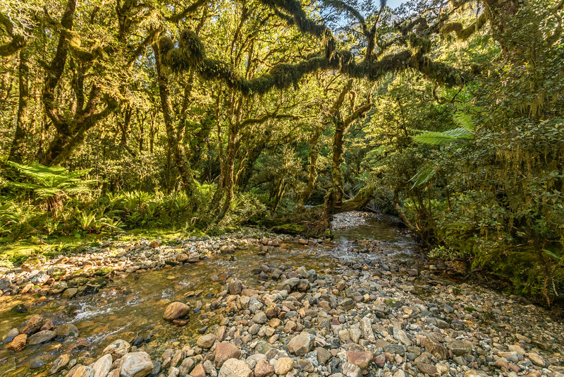 Katherine Creek. George Sound Route, Fiordland National Park.