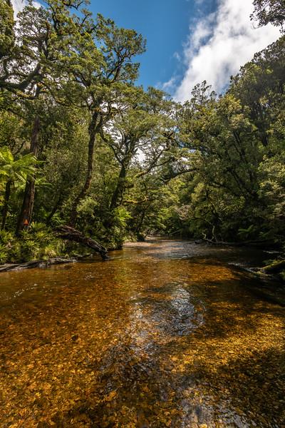 Katherine Creek. George Sound Route, Fiordland National Park.