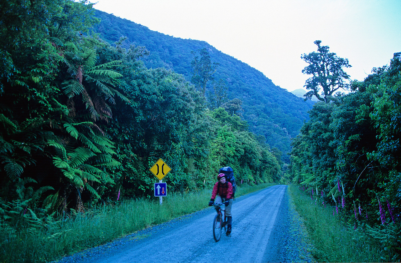 Biking the lower Hollyford Road