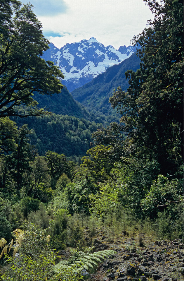 Hollyford Track. Chasm Creek and Karetai Peak