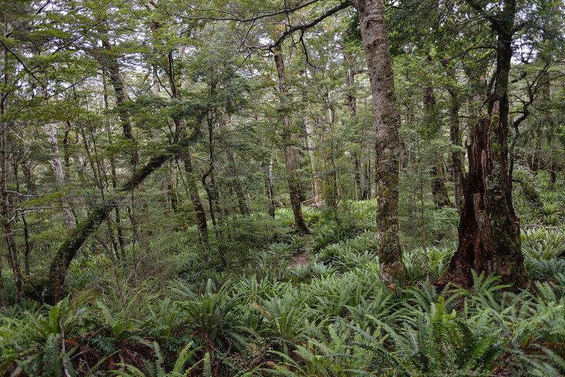 On the track from Green Lake to Lake Monowai