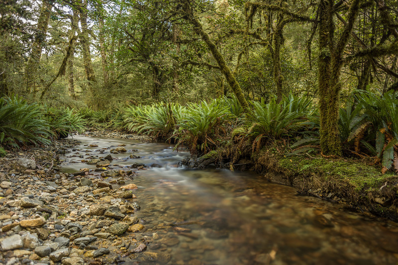 In the forest between Lake Monowai and Clark Hut