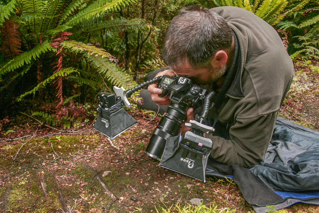 Photographing Helms's stag beetle (Geodorcus helmsi). South Coast Track, Fiordland National Park. Photo © Hannah Joynt.