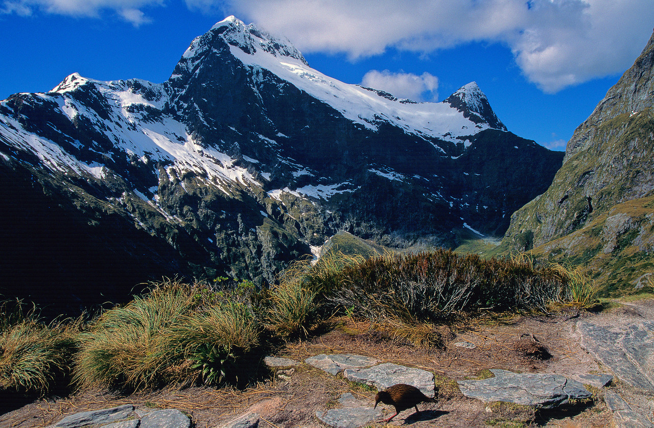Weka (Gallirallus australis) on MacKinnon Pass. Mount Elliot and Mount Wilmur above.