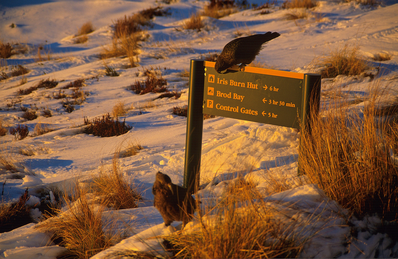 Kea can read!