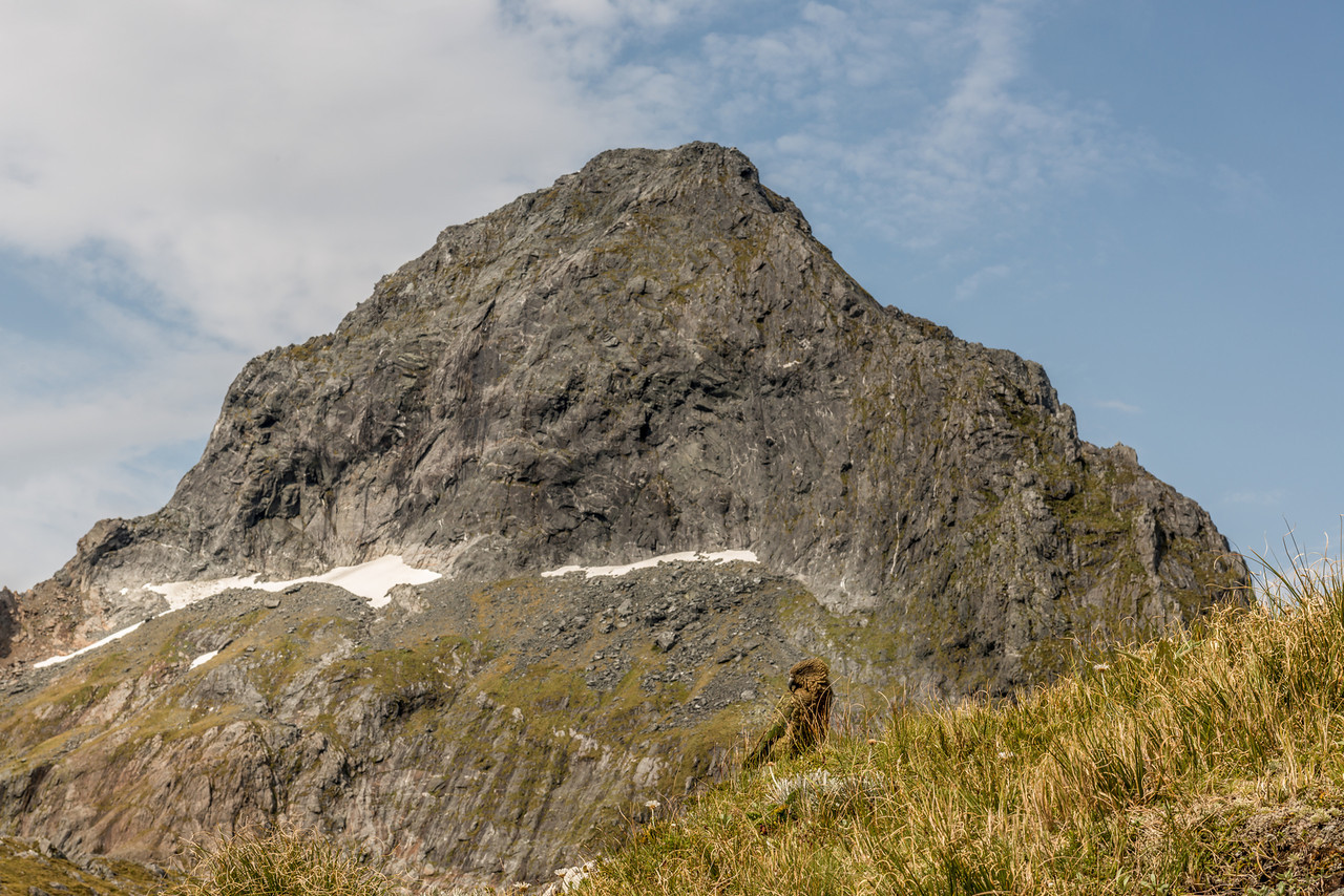 Kea (Nestor notabilis) and Mount Danger