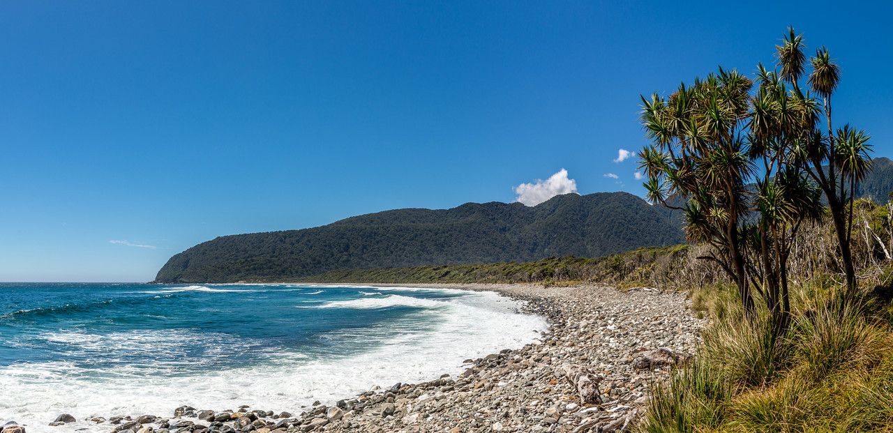 Cabbage tree / tī kōuka (Cordyline australis), Transit Beach