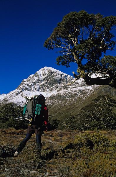 Climbing to McKellar Saddle