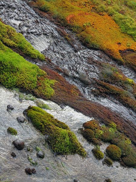 Moss near Gills