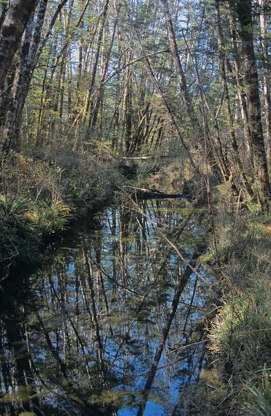 Borland River North Branch