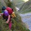 Climbing steep tussock on the route out of Cirque Creek