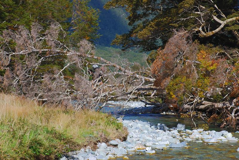 Spot Jaz, crossing a log over Mistake Creek