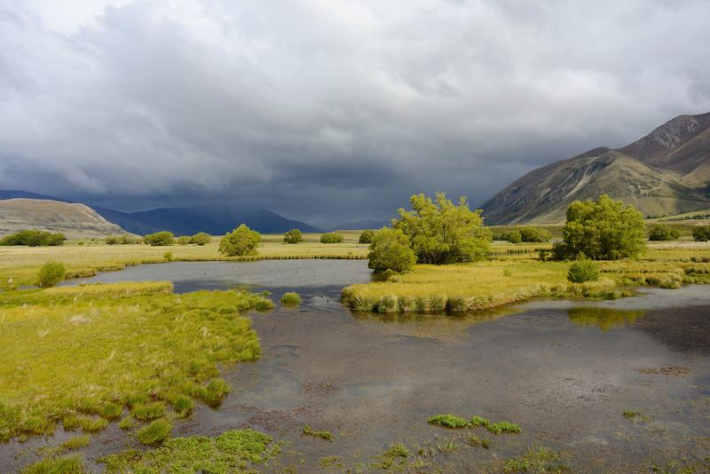 Ahuriri wetlands
