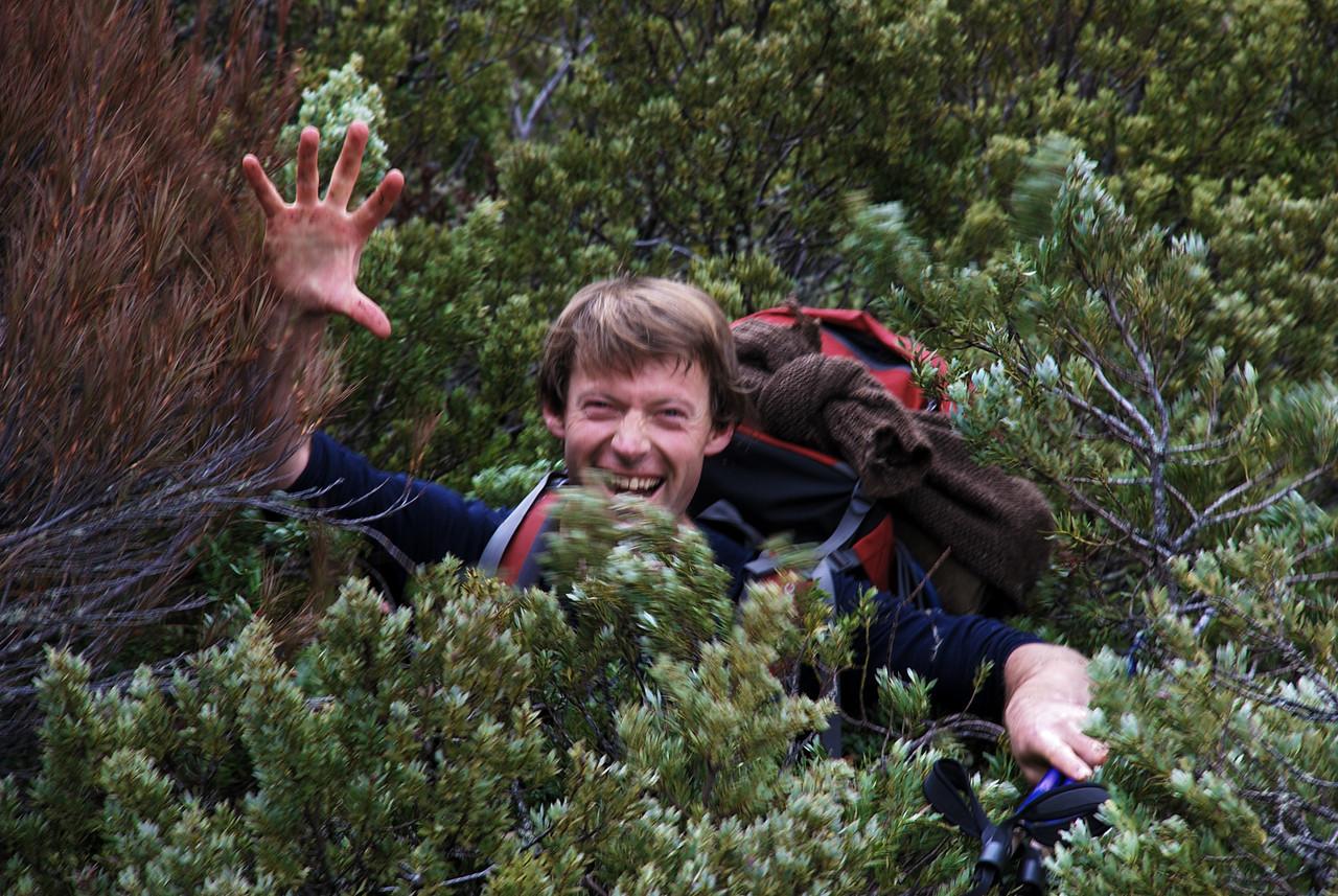 Simon enjoys the sub-alpine scrub at the head of the Dingle Burn...