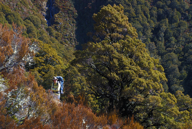 George at bushline en route to Cotters Creek Saddle, Makarora Valley