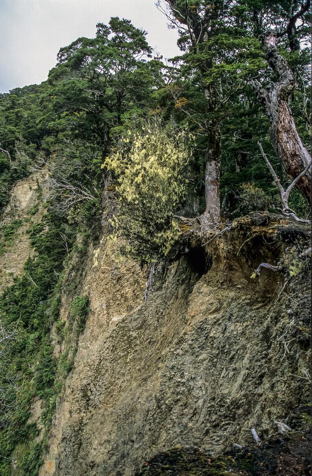 Erosion, MacKenzie Creek