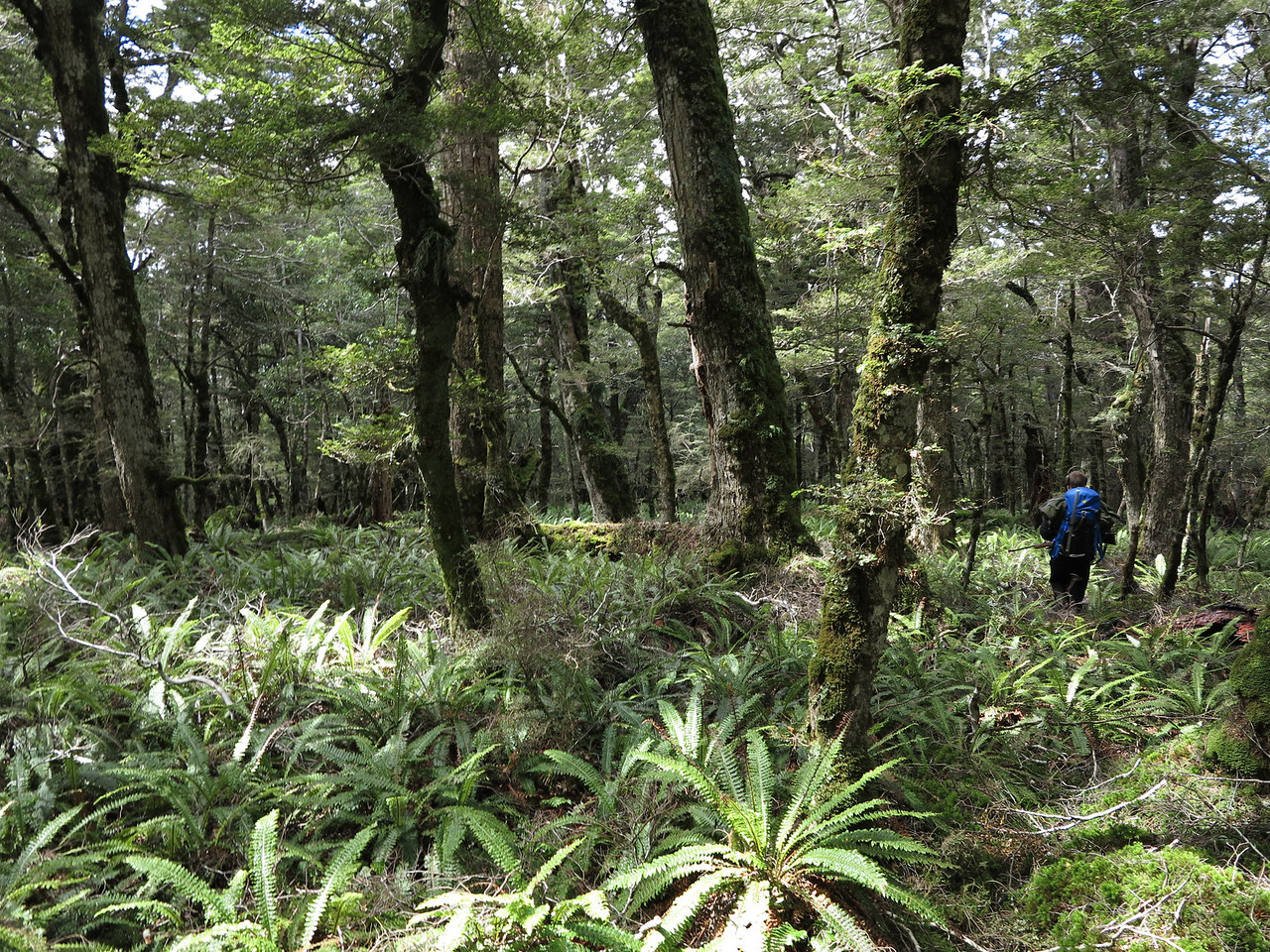 Takitimus bush hunting
