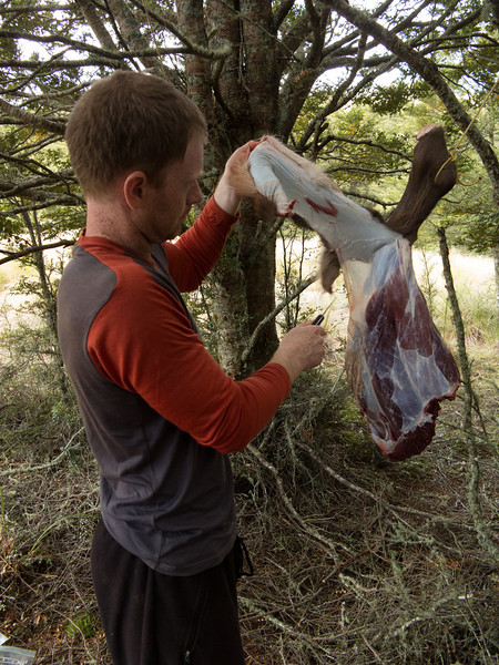 Butchering our stag back at camp