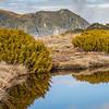 Excellent bog vegetation above bushline on Boyd Creek