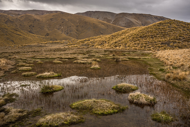 Alpine bog, Bush Stream.
