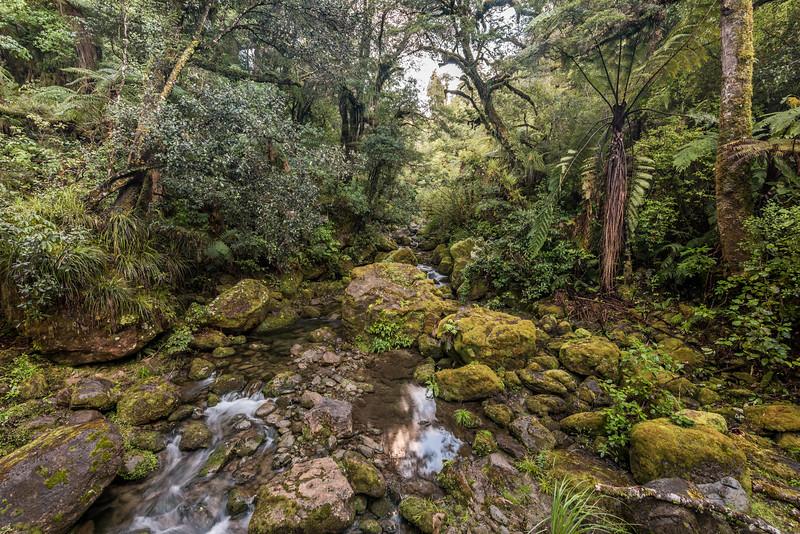 Huiarau Stream, Lake Waikaremoana Track