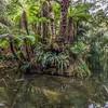 Waitotara Stream, Lake Waikaremoana