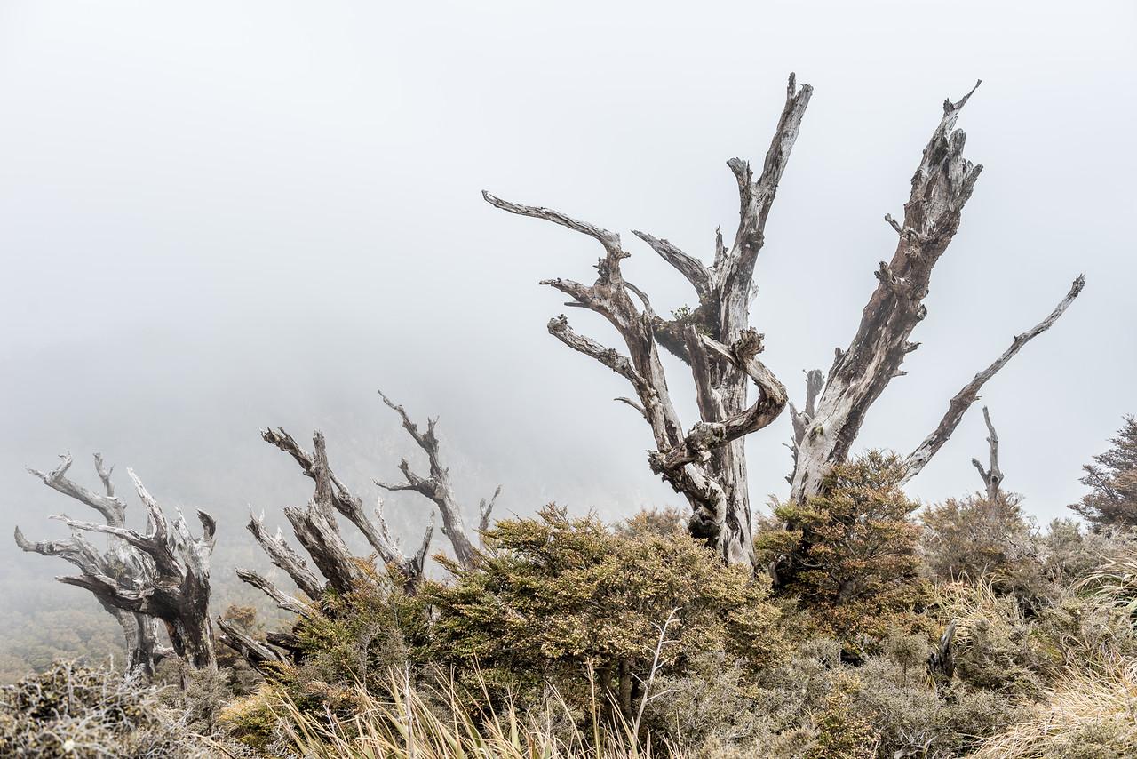 Bald Knob, Panekiri Range