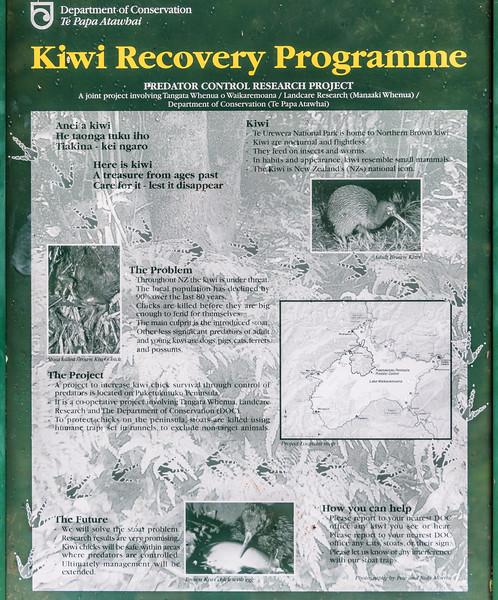 Puketukutuku Peninsula kiwi sanctuary, Lake Waikaremoana Track.